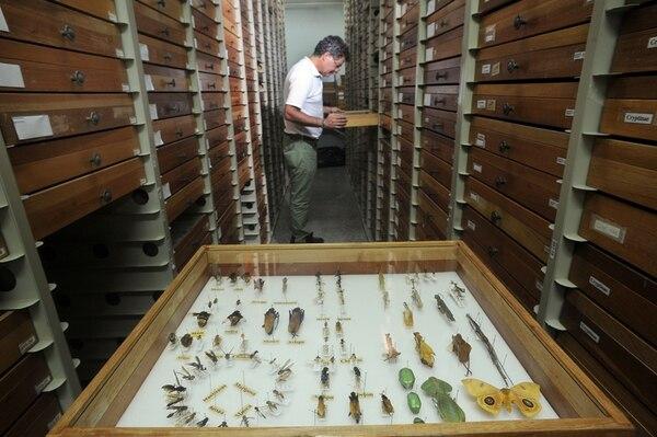 Manuel Zumbado revisa la colección de artrópodos que consta de unas 26.000 especies identificadas. La colección de artrópodos del INBio es consultada por la comunidad científica internacional; es más, se cuenta con una red de expertos que contribuyen a la identificación de los especímenes.   JORGE CASTILLO /ARCHIVO