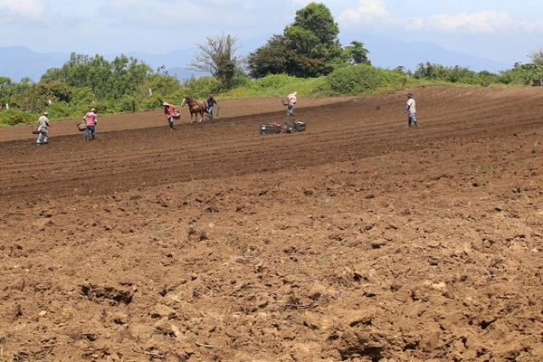 Los terrenos en la parte alta de Cartago estaban así, en marzo del 2019. Los agricultores y funcionarios regionales del Gobierno calcularon hasta en 50% las pérdidas en papa, cebolla y otros cultivos, por el déficit de lluvias. Foto: Rafael Pacheco
