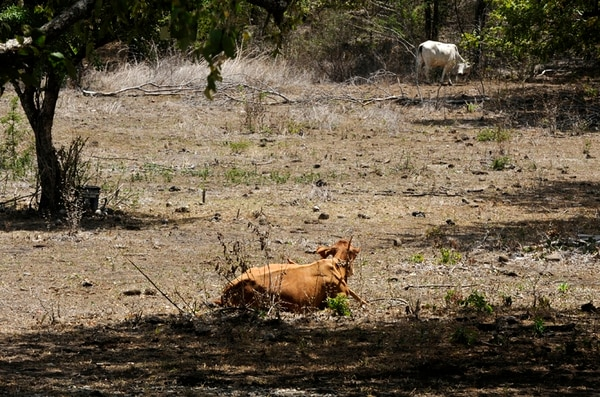 El embalse Río Piedras ayudaría a mitigar los efectos de las sequías, como esta ocurrida en el 2014, en Guanacaste. Fotografía: Graciela Solís.