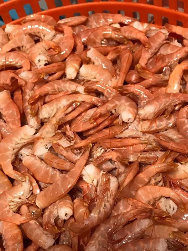 Unas 15 especies distintas de camarón se encuentran en los mares costarricenses. Christian Campos para LN.