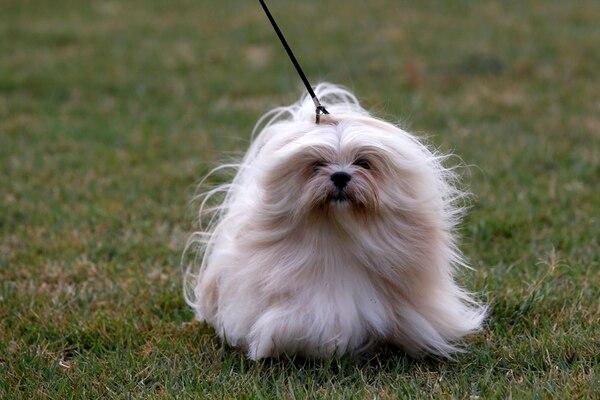 Una fiesta canina tomará el Parque Viva