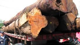 Autoridades intentarán frenar tala y extracción de animales