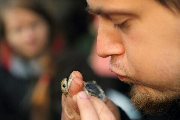 El ornitólogo Michal Redlisiak revisa a un ave durante una gira de campo cerca de Krynica Morska, al norte de Polonia.