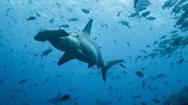 MarViva demanda al Estado por nombrar a Incopesca en convención para cuido de fauna marina