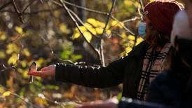 En el Nueva York con covid-19, muchos se relajan avistando aves en Central Park