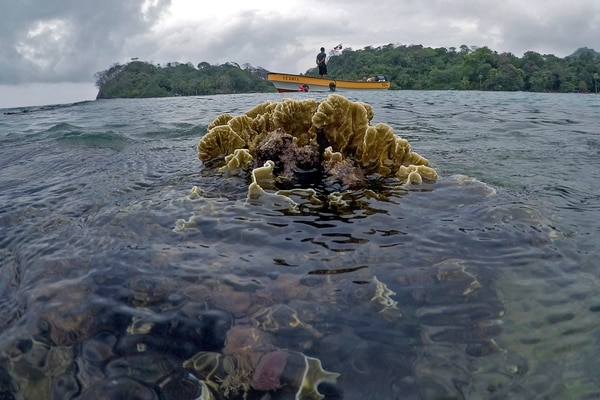 Tourists snorkel at a coral reef in Portobelo, Colon province, Panama, on April 16, 2021. - Every two weeks, Marine Biology students descend about five meters in the sea to take care of a coral nursery of the staghorn species (Acropora cervicornis), with which they aim to restore reefs damaged by climate change and pollution, as part of the Reef2Reef project. (Photo by Luis ACOSTA / AFP)