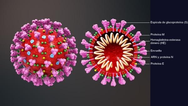 Estas son las proteínas del virus SARS-CoV-2, causante de la covid-19. Imagen: Wikimedia commons