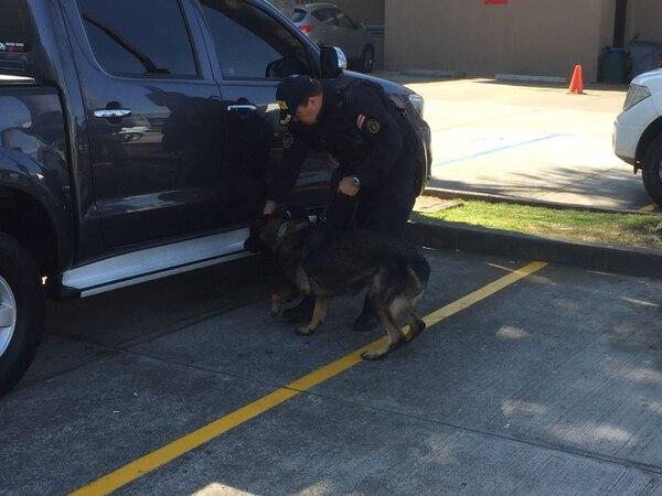 Los perros se encargaron de colaborar con la labor policial.