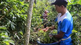 Un día cogiendo café: las historias que esconde el cafetal