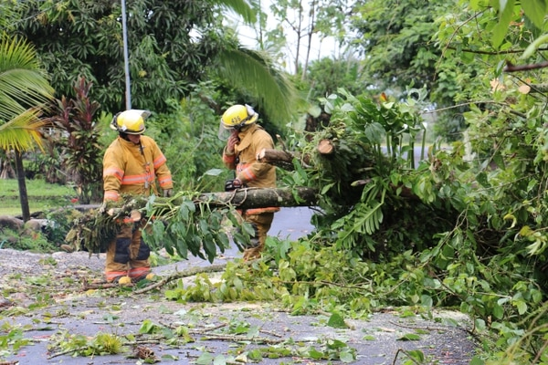 La caída de árboles sobre la vía en Pococí afectó el paso vehicular por varias horas este viernes.