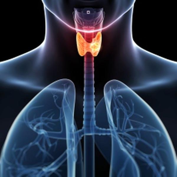 La tiroides es la glándula que controla el metabolismo.