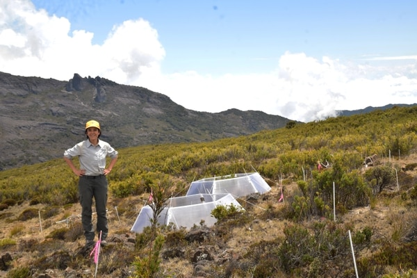 Andrea Vincent en el Chirripó, donde estudia cómo responde este ambiente al cambio climático