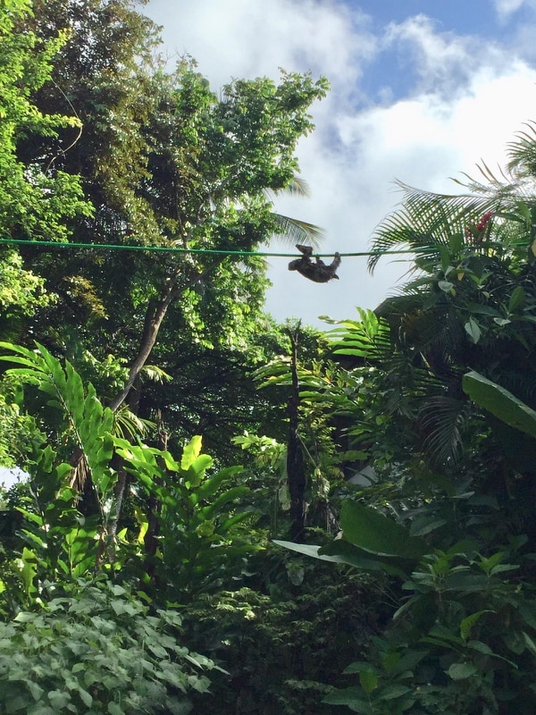 Un perezoso se desplaza por un paso de fauna aéreo. Foto: Suministrada por The Sloth Institute