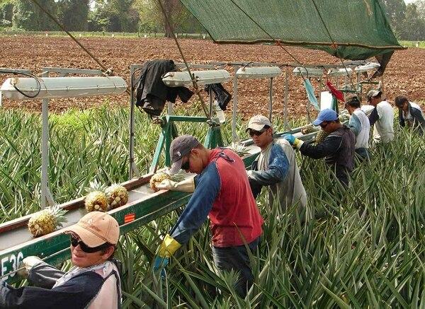 Cultivos de piña en la Zona Norte. La agricultura se mantiene en el terreno negativo, en parte por la menor producción de piña y banano, pero cae menos que meses anteriores.