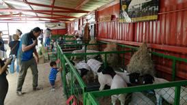 Una carrera de ovejas lo espera este domingo en Cartago