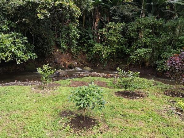 Especímenes de importancia ecológica se plantaron en áreas de protección del río Torres en Sabanilla, en las cercanías del Estadio Nacional y en Mata de Plátano. Fotos: cortesía de Minae.