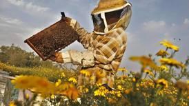 Unas 1.500 familias apicultoras luchan por reactivar la producción de miel en todo el país