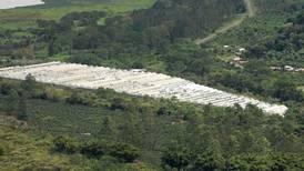 Municipalidad de Paraíso debe pagar ¢3.500 millones a empresa de plantas ornamentales que le ganó demanda