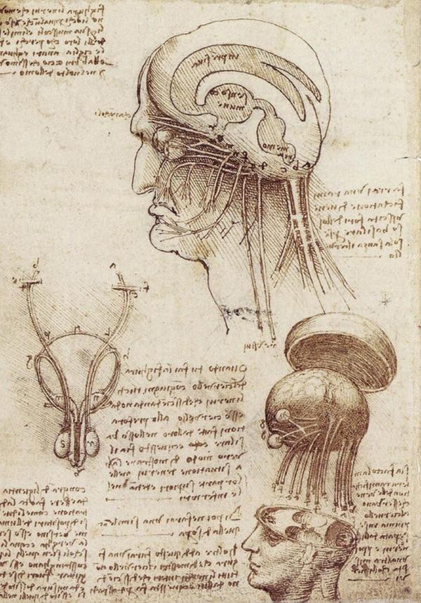 Unos de los dibujos que Leonardo Da Vinci (1452-1519) elaboró sobre el encéfalo humano.