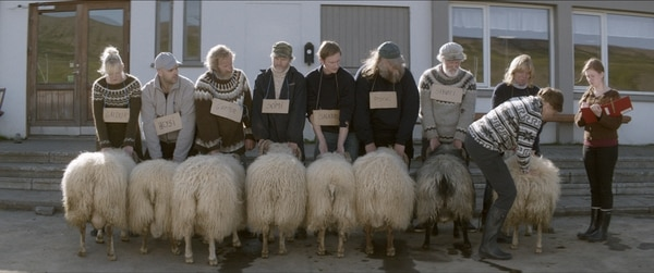 La película Carneros se filmó al norte de Islandia, una zona rural donde la ganadería sigue siendo modo de subsistencia para cientos de habitantes. Cortesía de Pacífica Grey.