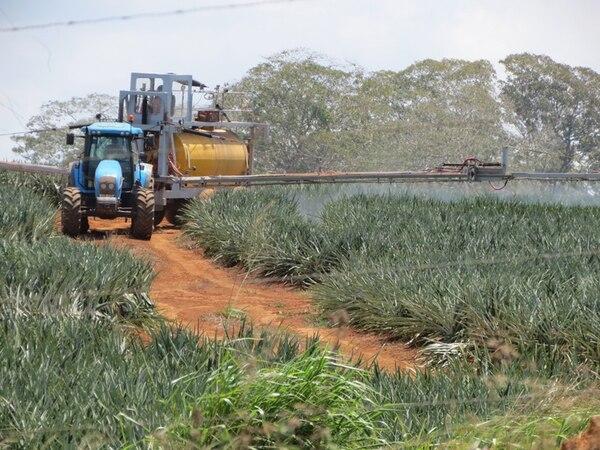 Nuevas fincas piñeras están a pocos metros de la faja fronteriza con Nicaragua, por donde pasa la ruta conocida como la trocha. Esta fruta ya se disputa con el banano el primer lugar como exportador agrícola. | CARLOS HERNÁNDEZ