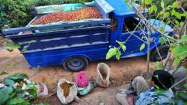 Grupos agrícolas temen atraso en recolección de cosechas por falta de mano de obra
