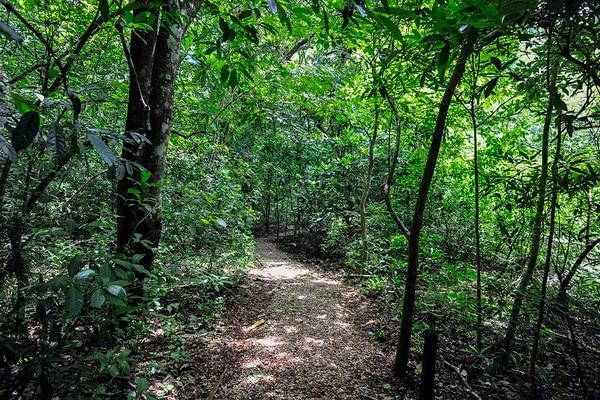 El Parque Nacional Diriá se ubica en Santa Cruz de Guanacaste. Su bosque protege uno de los tesoros más preciados de la zona: el agua.