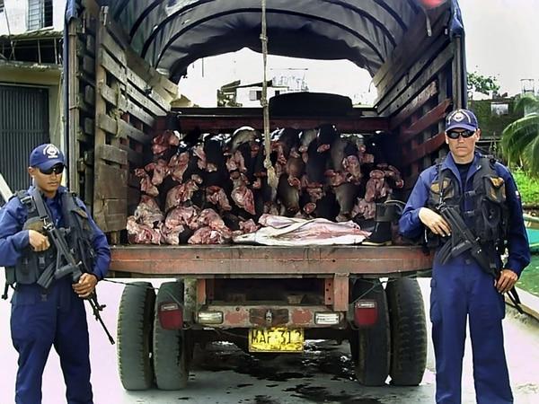 Soldados de la Armada colombiana detuvieron un camión cargado con tiburones en Buenaventura, departamento de Valle del Cauca. La foto data del 2007. AFP