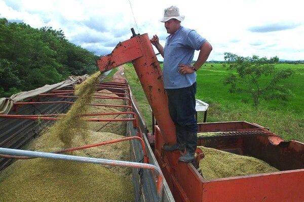 La investigación del MEIC determinó que la importación de arroz pilado (sin granza) no daña la producción nacional.   ARCHIVO