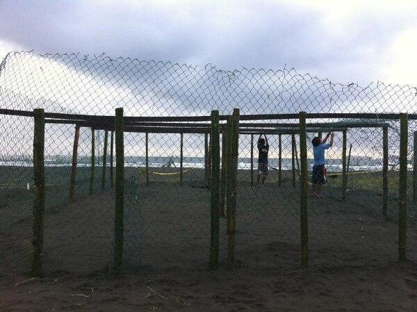 El vivero está en Moín y es para proteger los nidos. | WIDECAST PARA LN.