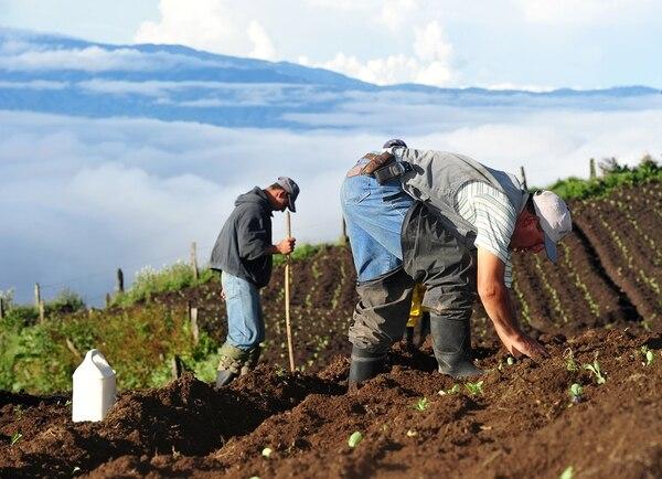 Este 15 de mayo es el Día del Agricultor. Cartago es una de las provincias donde más personas se dedican a esta actividad.