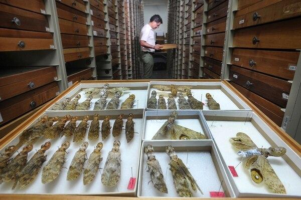 Manuel Zumbado es curador de las colecciones en custodia del INBio durante 25 años. | JORGE CASTILLO