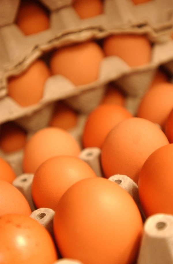 El permiso incluye a huevos fértiles y pollitas de un día.