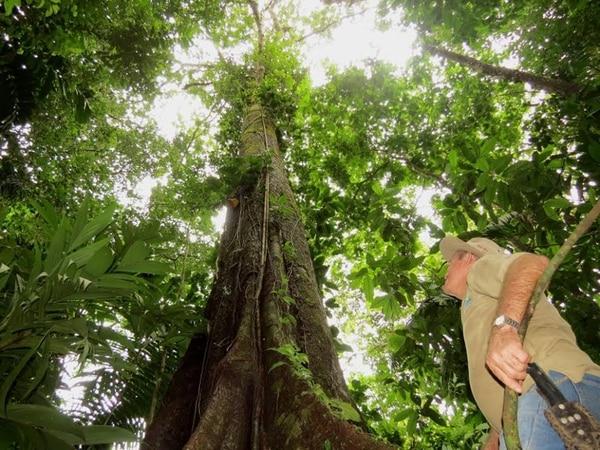 11 especies de rboles podr an estar extintas la naci n for Cuales son los arboles perennes
