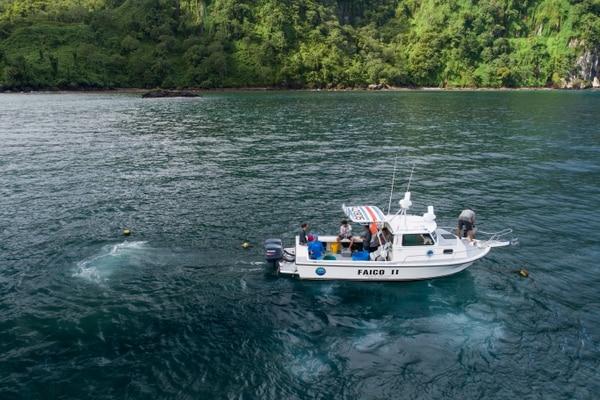 Se lograron marcar un total de 25 tiburones de seis especies, que seguirán enviando información hasta que el dispositivo deje de operar. Foto: Faico