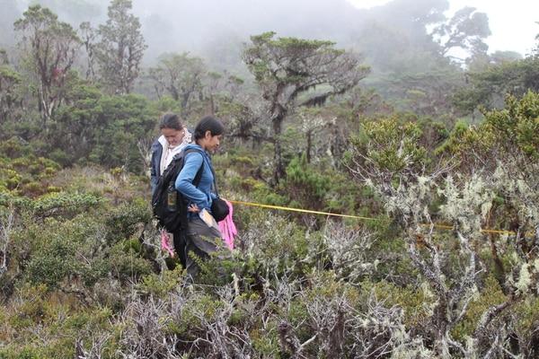 El equipo de investigadores de la UNED, UCR, UNA e ITCR trabaja en el páramo de la Reserva Biológica Cerro Las Vueltas, ubicada en el cerro de la Muerte. | MARÍA ALEJANDRA MAGLIANESI PARA LN