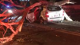 Exsíndico muere al caer árbol sobre el carro que conducía en Guanacaste