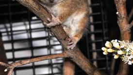 Hallados los  huesos de primate más antiguos