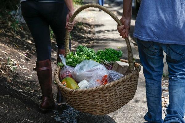 Para poder mercadearse como orgánicos, el Ministerio de Agricultura y Ganadería (MAG) exige a los productores una certificación. | MAYELA LÓPEZ