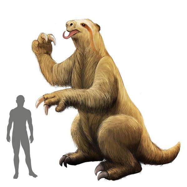 Los huesos hallados corresponden a perezosos gigantes similares a los de esta imagen, cuya estatura puede fácilmente superar el doble de la de una persona. Ilustración: Franklin Rodríguez