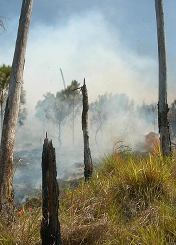 incendio, deforestación
