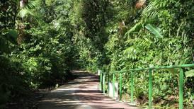 Tala ilegal es la mayor causa de denuncias ambientales en Costa Rica