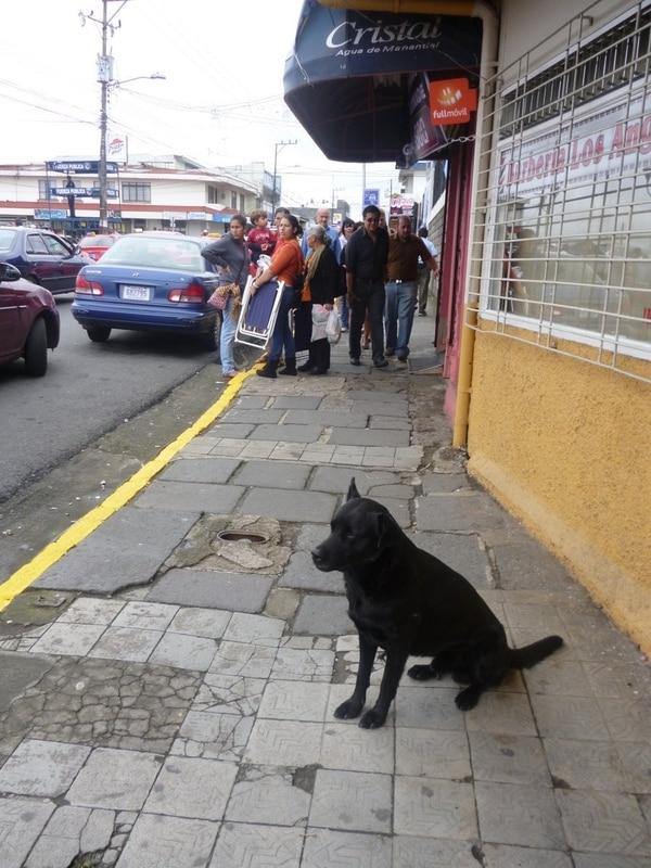 Según Senasa en el 2012 más de 30 perros fueron abandonados tras la romería.