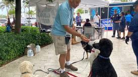 Perros de terapia brindan calma en medio del trauma del derrumbe de Florida