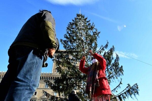 Turistas tomaban fotografías del árbol