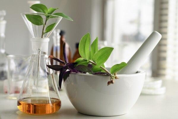 Consumir Plantas Medicinales Podría Alterar Acción De Tratamiento Contra El Cáncer La Nación