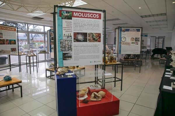 La exposición del Museo de Zoología se ubica en la Sala Multiuso de la Escuela de Estudios Generales de la UCR.