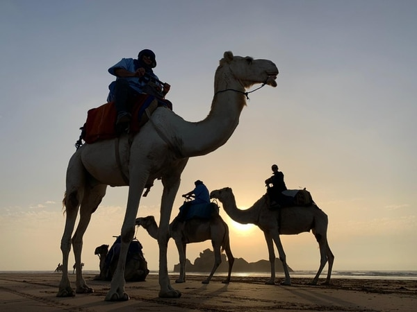 Esta imagen corresponde a un paseo en dromedario en Essaouira, Marruecos. Fotografía: Paula Marcel Villegas Morera