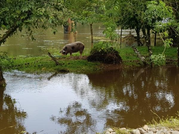El Servicio Nacional de Salud Animal (Senasa) aseguró que, desde la semana pasada, se encuentran en las zonas vulnerables los equipos, coordinando con los Comités Municipales de Emergencia, para atender a los animales. Foto: Cortesía del Senasa