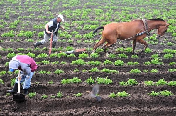 Costa Rica Un País Inundado De Agroquímicos Busca Impulsar La Agricultura Orgánica La Nación